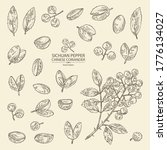 Collection of sichuan pepper: plant, pepper and leaves. Chinese coriander. Vector hand drawn illustration.