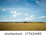 fields and meadows of scania ... | Shutterstock . vector #177624485