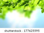 fresh green leaves with shiny... | Shutterstock . vector #177625595