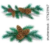 Two Branches Of Pine Tree With...