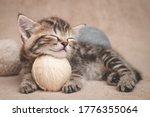 Kitten Sleeps Resting Its Head...