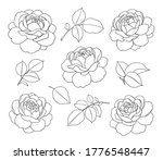 contoured simple rose flowers...   Shutterstock .eps vector #1776548447