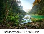 Landscape Rain Forest National...