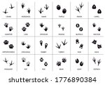 animals footprint. animal ... | Shutterstock .eps vector #1776890384