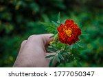 Man's Hand Holding A Flower