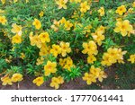 Fresh Yellow Flowers Background ...
