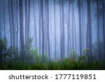 Small photo of Misty forest background. Forest mist scene. Misty forest trees
