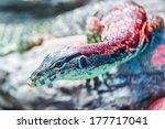 head of water monitor lizard ... | Shutterstock . vector #177717041