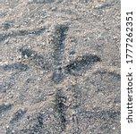 Bird\'s Footprints In The Sand
