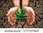 hands growing a tree on crack... | Shutterstock . vector #177727469