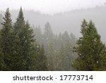 snowy forest | Shutterstock . vector #17773714