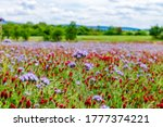 Summer Landscape Background...