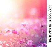 cosmos flowers   Shutterstock . vector #177779177