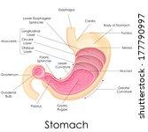 vector illustration of diagram... | Shutterstock .eps vector #177790997