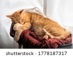 A Brown Tabby Cat Lying On A...
