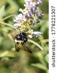 An Upside Down Bumblebee...