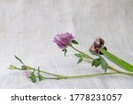 Bouquet Of Field Clover And...