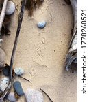 Bird Tracks On The Beach With...