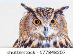 Eagle Owl  Eurasian Eagle Owl ...