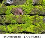 Natural Moss On Wall Bricks