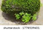 Old Stone Brick Covered With...