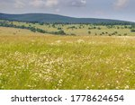 Small photo of Closeup of colorful blooming meadow, distant wooded ridge on horizon. Various blooming flowers, mostly ox-eye daisies, on meadow, Bile Karpaty mountains, Czech Republic.
