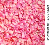 Stock photo pink rose petals background 177873305