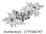 Hand Drawn Acherontia Styx...