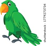 Parrot Cartoon Vector Art And...