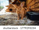 Brown Rabbit In Wooden Cage At...