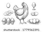 Hen And Eggs Sketches. Hand...