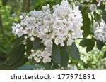 Close Up Of A Cluster Of White...