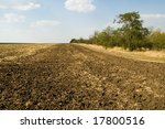 field under blue sky and trees - stock photo