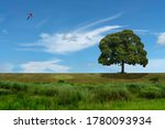 Big Tree And Kite On The Meadow