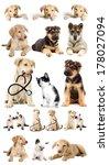 Stock photo puppy looks set 178027094