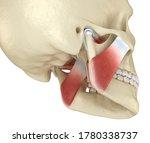 Tmj  The Temporomandibular...