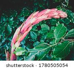 Intense Pink Big Flower ...