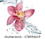 Orchid Water Splash