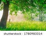 Green Tree On Meadow In Misty...