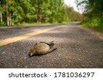 Bird Sparrow Killed By Car On...