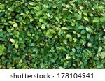 close up of outdoor bush with... | Shutterstock . vector #178104941