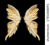 Butterfly Wings With Feathers....