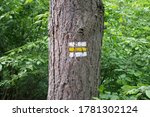 Tourist Sign In Forest Summer...