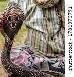 Small photo of Snake charmer Indian fakir is played King Cobra Snake in basket