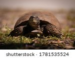 Turtles And Tortoise Out In...