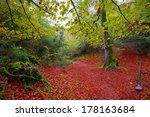 Stock photo autumn selva de irati fall beech jungle in navarra pyrenees of spain 178163684