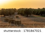 Bales Of Dry Straw Next To The...