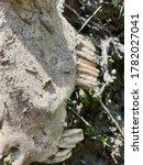 Bones Of Animal Skulls Bone An...