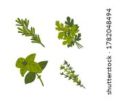 culinary herb. common aromatic... | Shutterstock .eps vector #1782048494