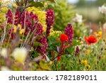 Stunning garden flowers growing in a flowerbed. Seasonal plants during summer in England